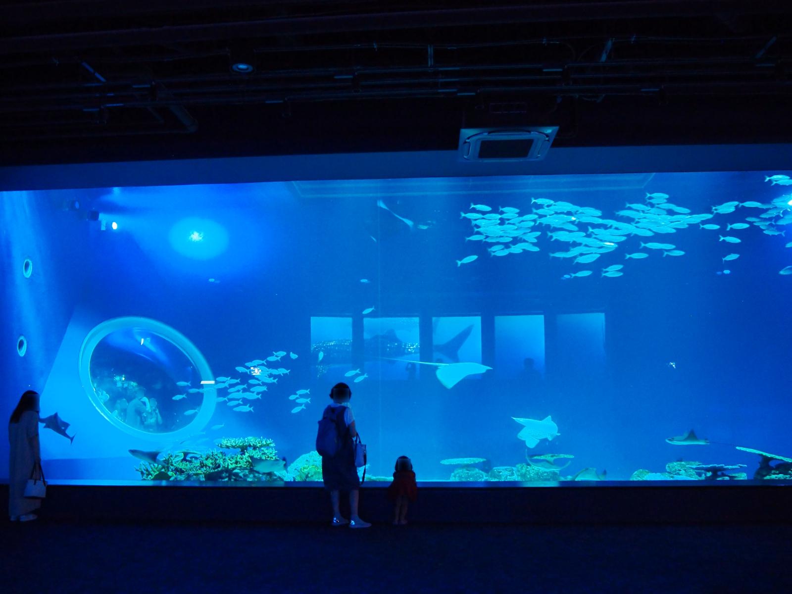 DMM沖縄水族館02